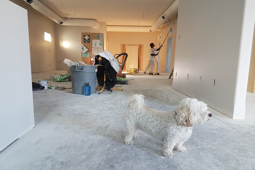 Man painting a wall with a dog on the carpet