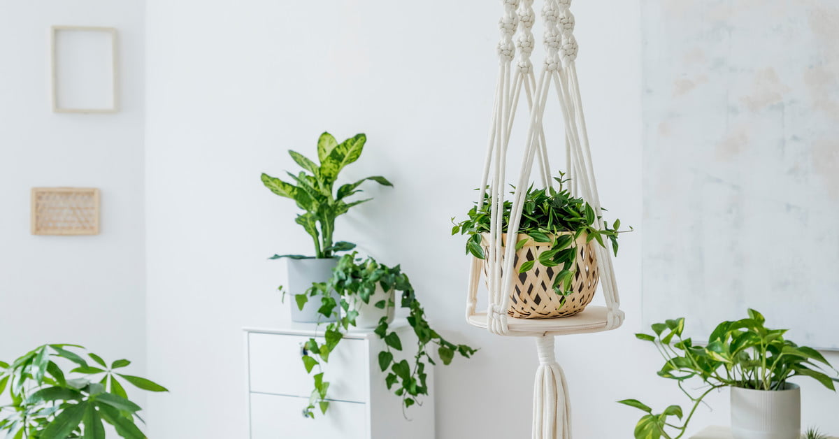 How to hang plants from your ceiling in less than 20 minutes - 21Oak