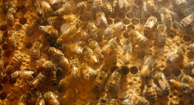 bees by bcjordan via Flickr
