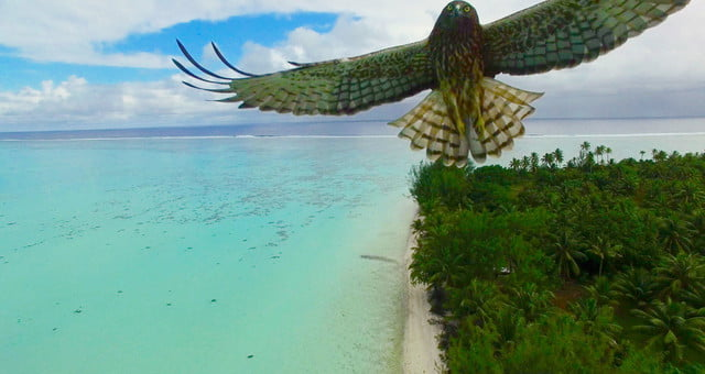 dronestagram best of 2016 bird attack in french polynesia by actua drone