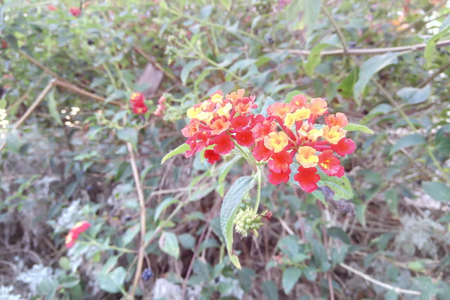 cat s41 review camera sample red yellow flowers