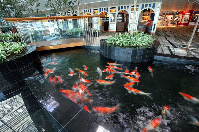 best airports for layovers changi airport 7