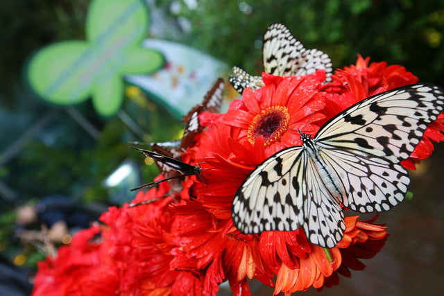 best airports for layovers changi airport butterfly garden