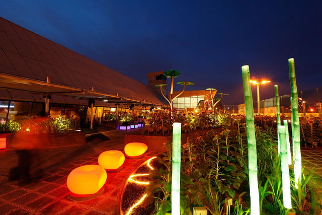 best airports for layovers changi airport sunflower garden