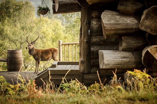 retreat from society and relax in these idyllic cabins around the world eagle brae highland log 6
