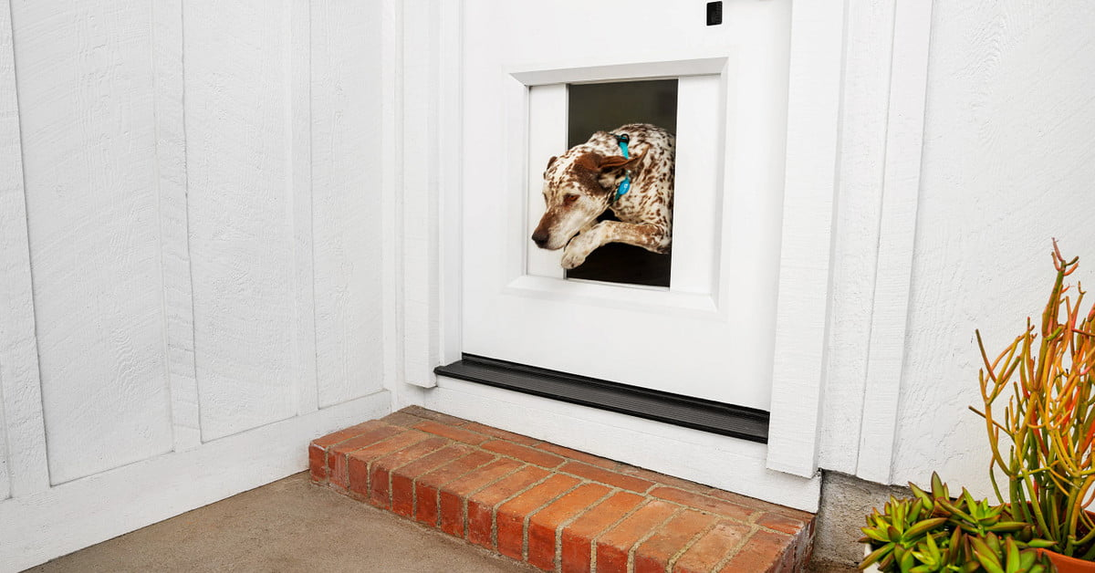 This $3,000 doggy door automatically opens when your pets approach