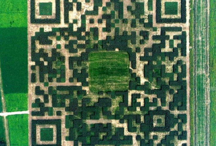 giant qr code made of trees china 1
