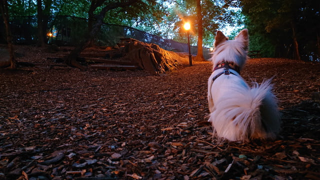sony xperia xz2 review camera sample low light dog