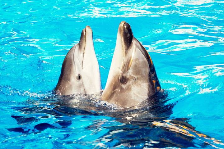 Translation technology may let humans speak with dolphins