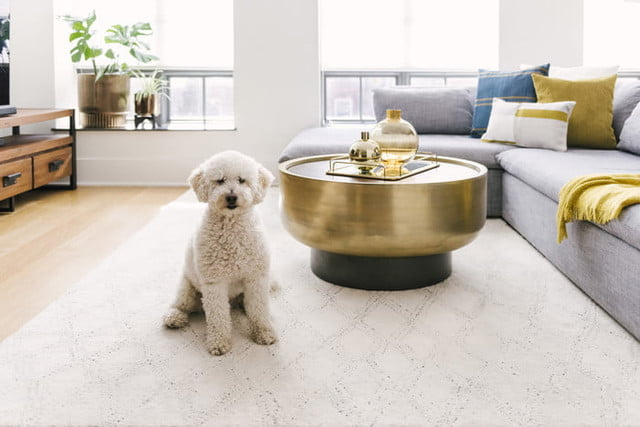 the best zoom backgrounds west elm doggie