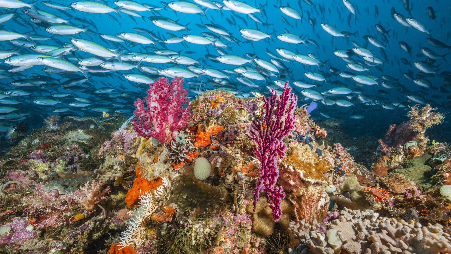 best diving sites in the world raja ampat scuba getty images 2