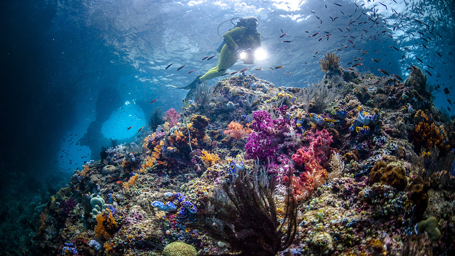 best diving sites in the world raja ampat scuba getty images