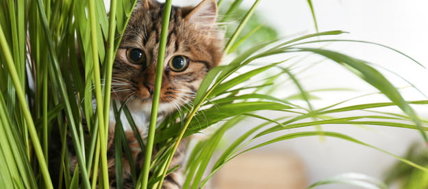 A striped brown cat crouches behind long, thin plant leaves.