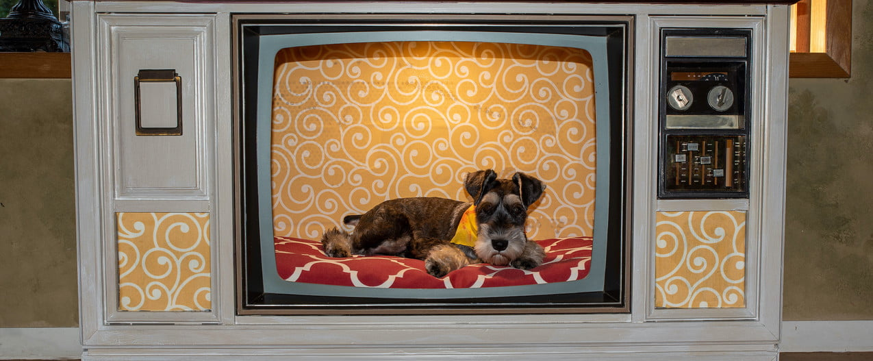 a Schnauzer sits in his crate decorated to look like a television