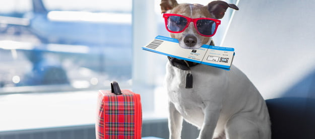 air travel pets airline 2