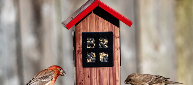 Two birds eating at a birdfeeder