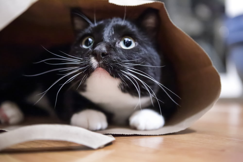 4 Incredible Ways To Calm A Cat Who's Scared Of Everything   PawTracks