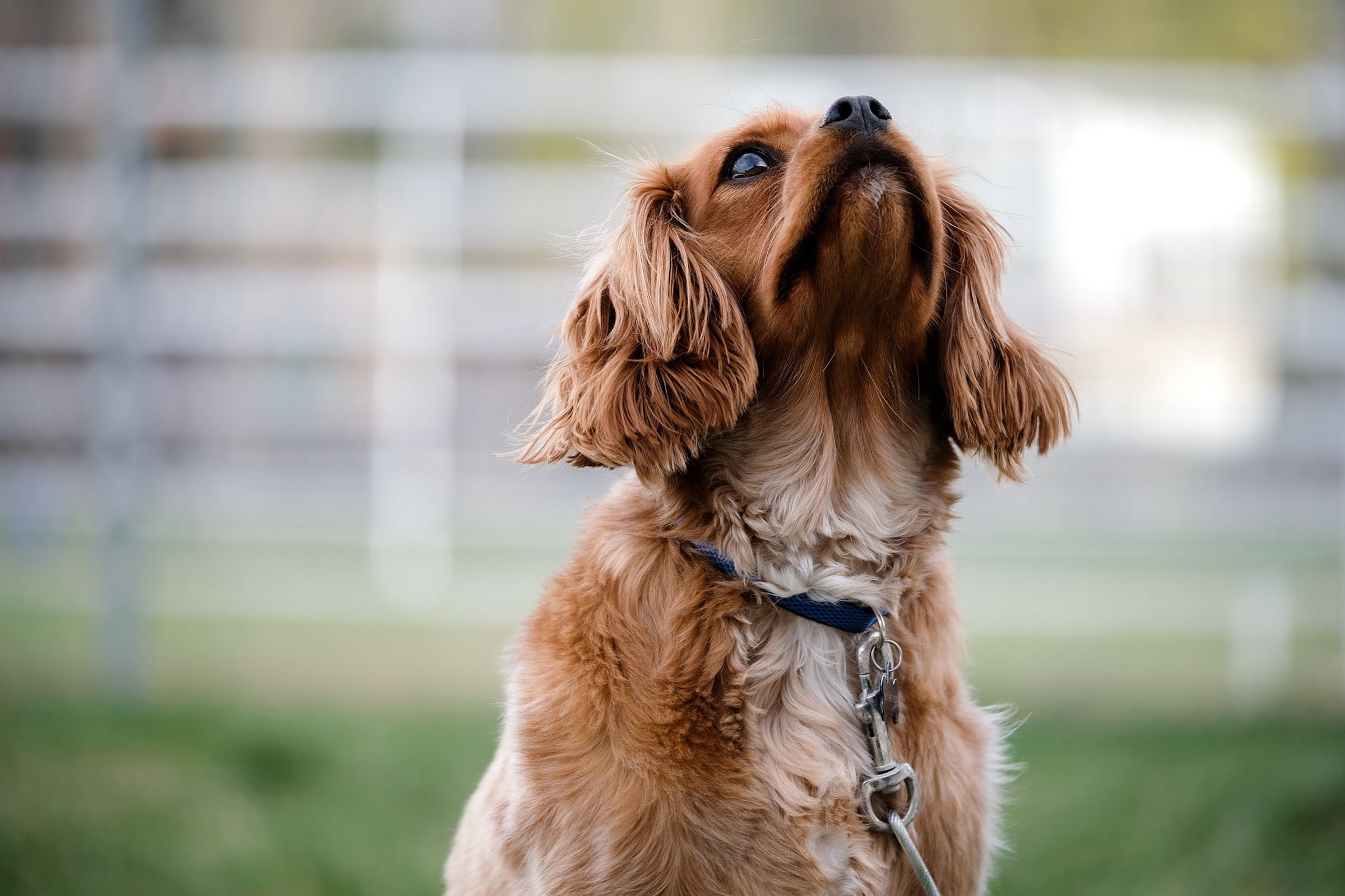 What You Need To Know About Dog Puberty Before It Happens | PawTracks
