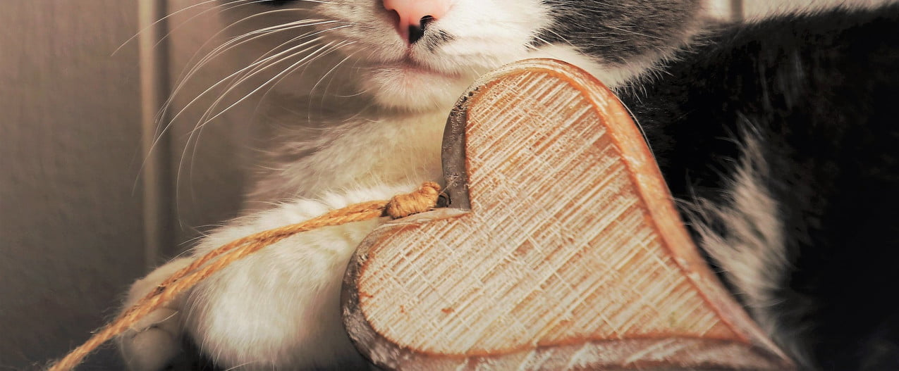 Grey and white cat lying down with a wooden heart ornament