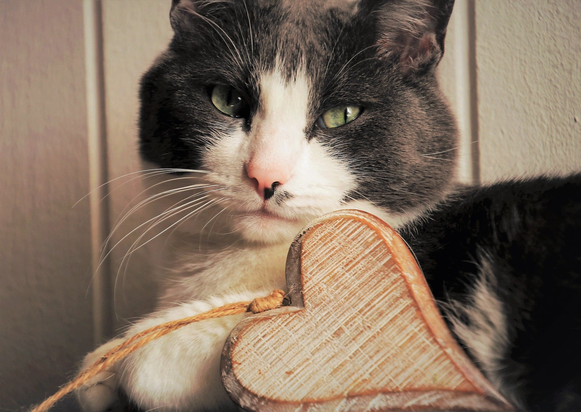 These Six Tips Can Help You to Gain Your Cat's Affection | PawTracks