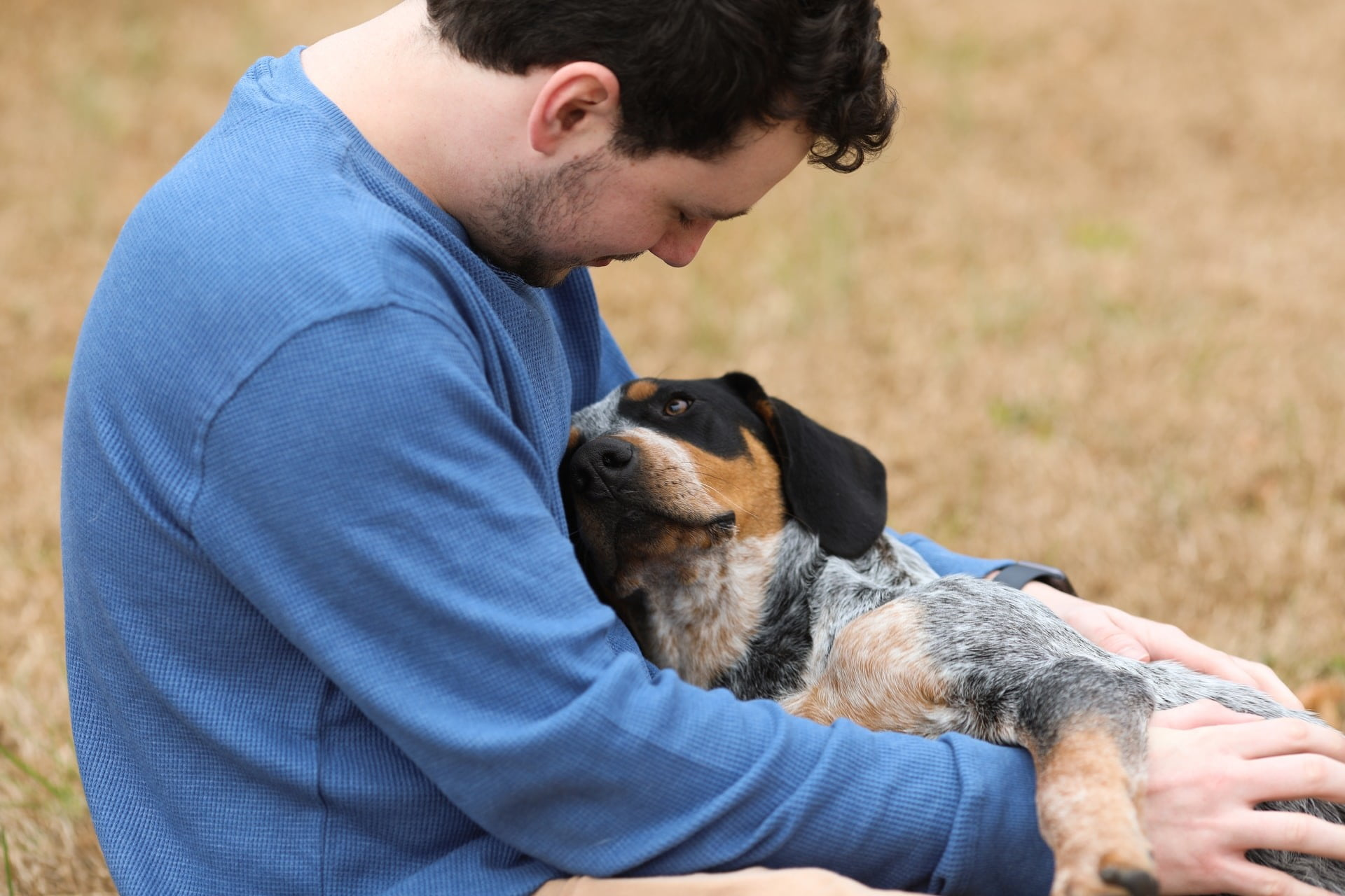 5 tips from the experts to stop a dog's excessive guarding | PawTracks