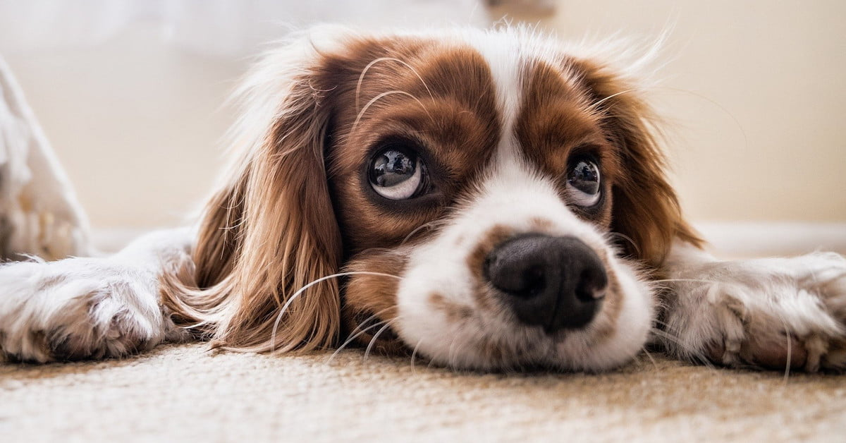 Curb your puppy's whining habit: Our top tips | PawTracks