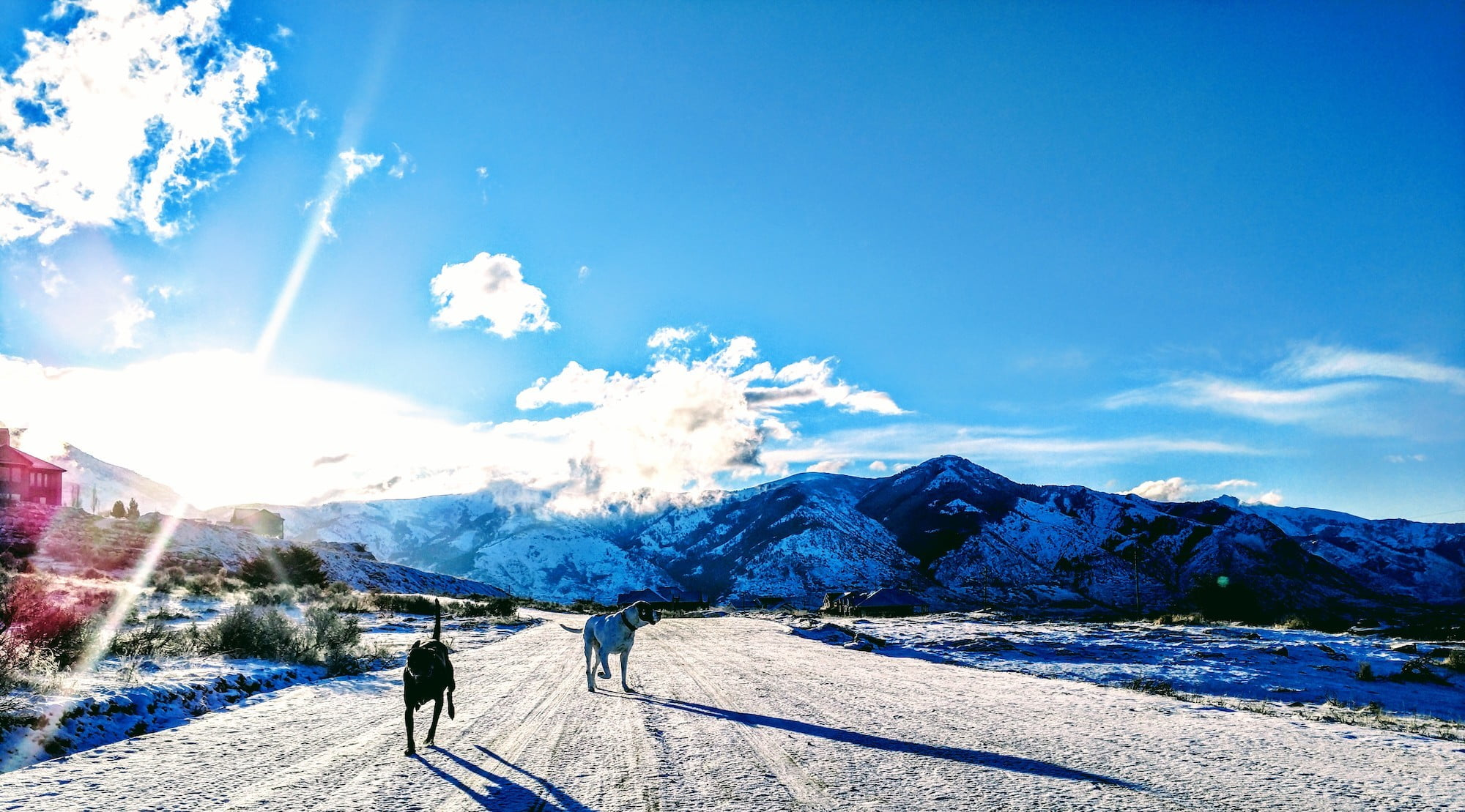 a black dog and a white dog (further away) sun along a snowy path with winter mountains behind them, underneath a mostly clear s
