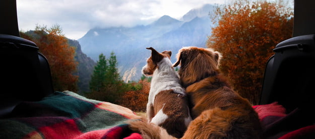 Two dogs sitting on a blanket looking out at the mountains