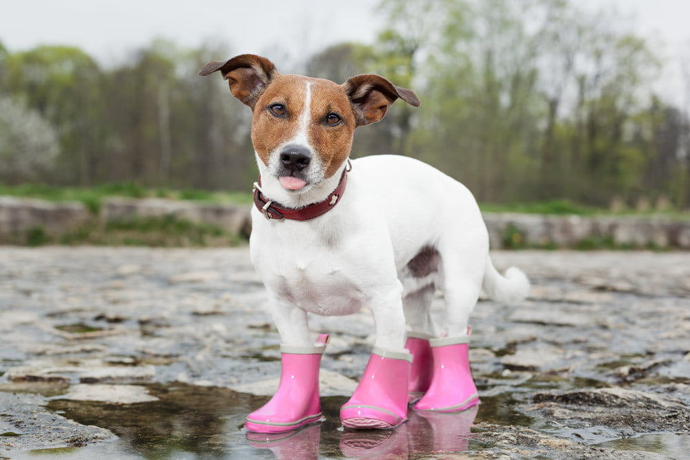 How to size dog boots so they don't fall off | PawTracks