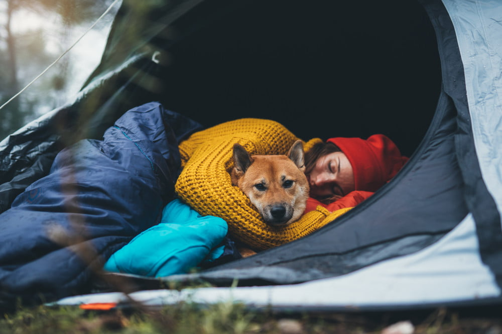The ultimate checklist for camping with your dog   PawTracks