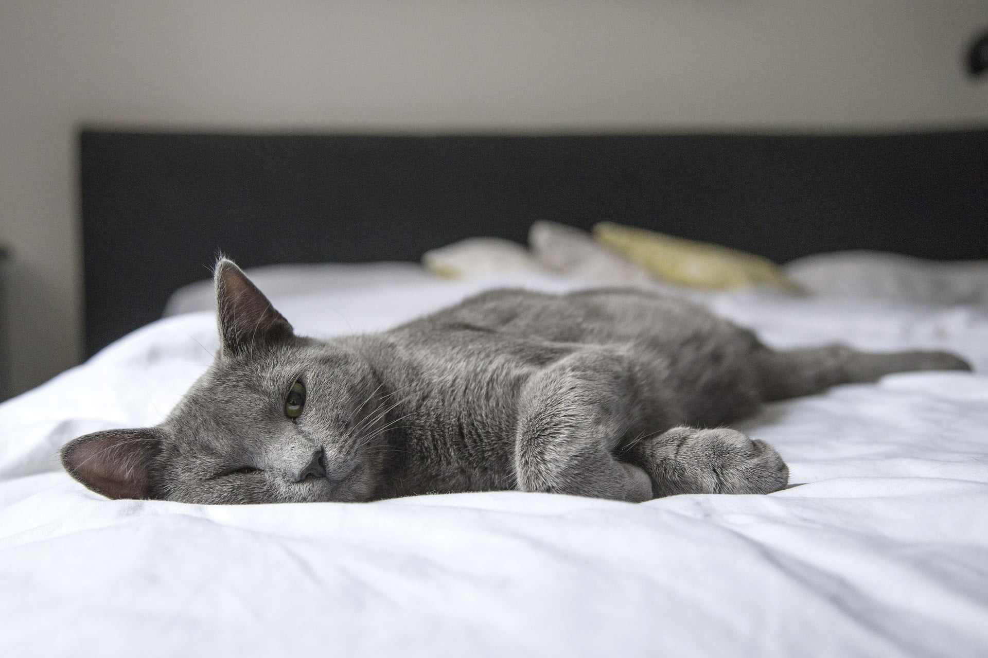 These Tips Can Encourage Your Cat to Be Your Cuddle Buddy | PawTracks