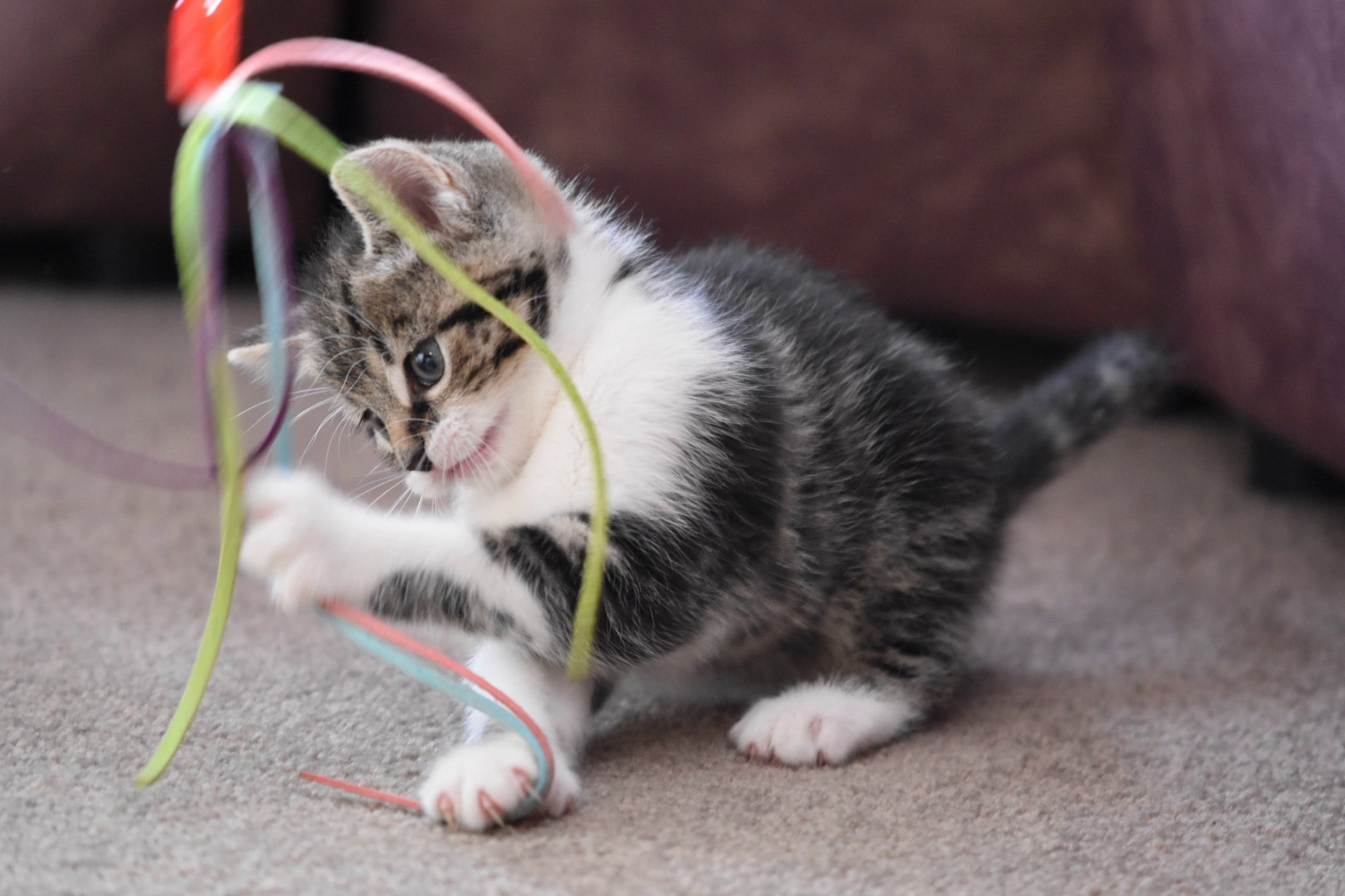 Both You and Your Cat Will Love These Electronic Cat Toys | PawTracks