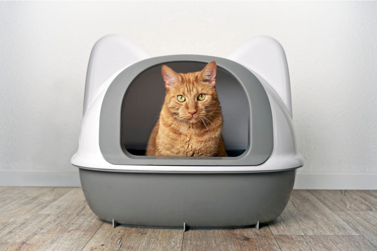 Here's Why Multiple Cats Sharing Litter Boxes Is Bad News | PawTracks