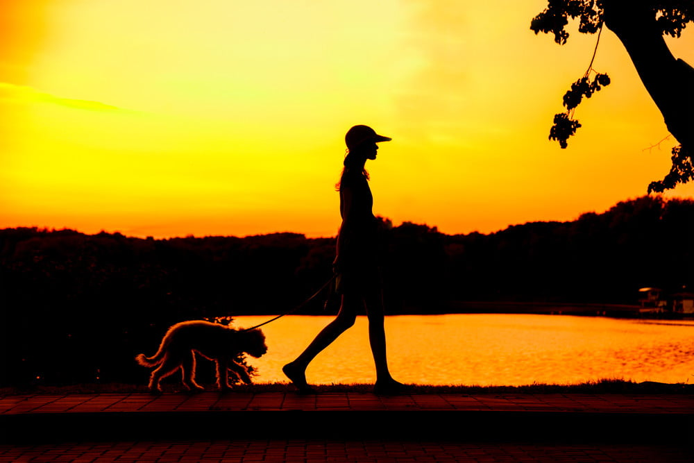 6 safety tips for taking a dog for a walk at night | PawTracks