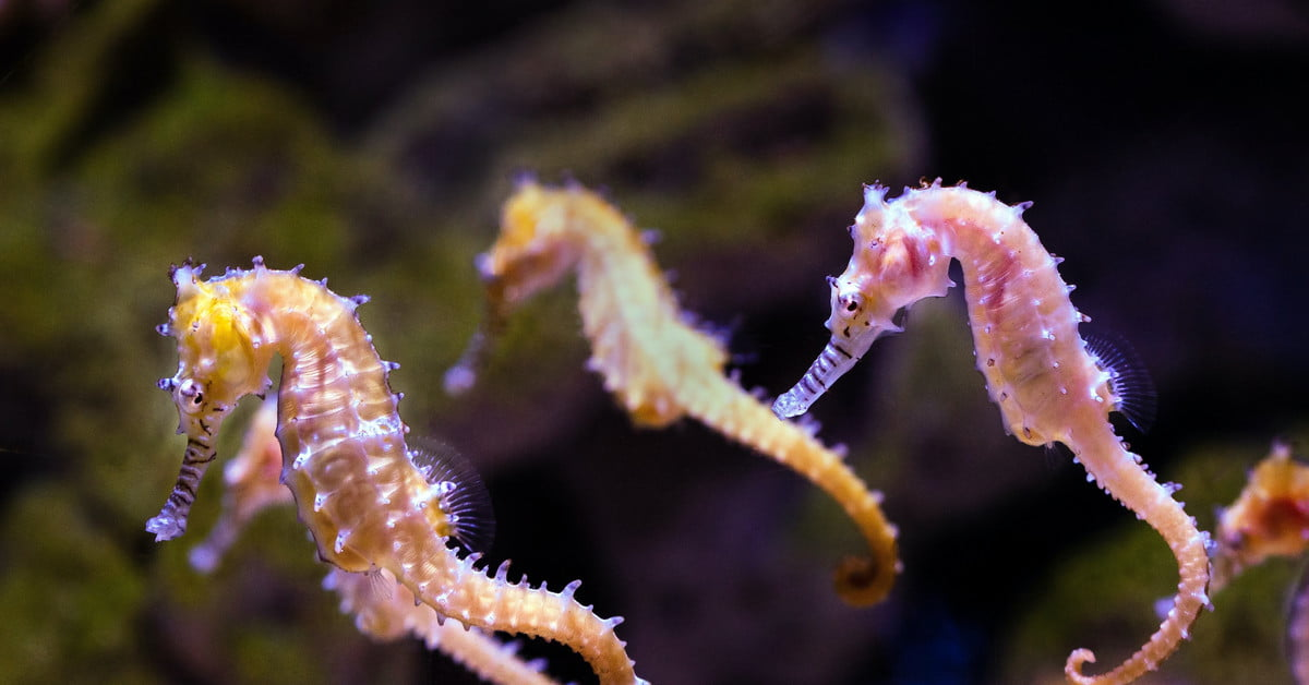 Before getting seahorses, here's what you need to know | PawTracks