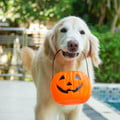 A golden retriever carries a jack-o-lantern treat bucket in his mouth