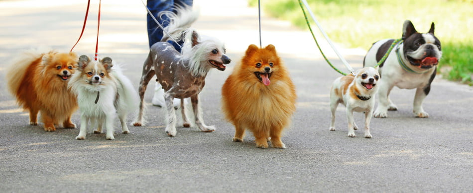 four dogs on a walk in park