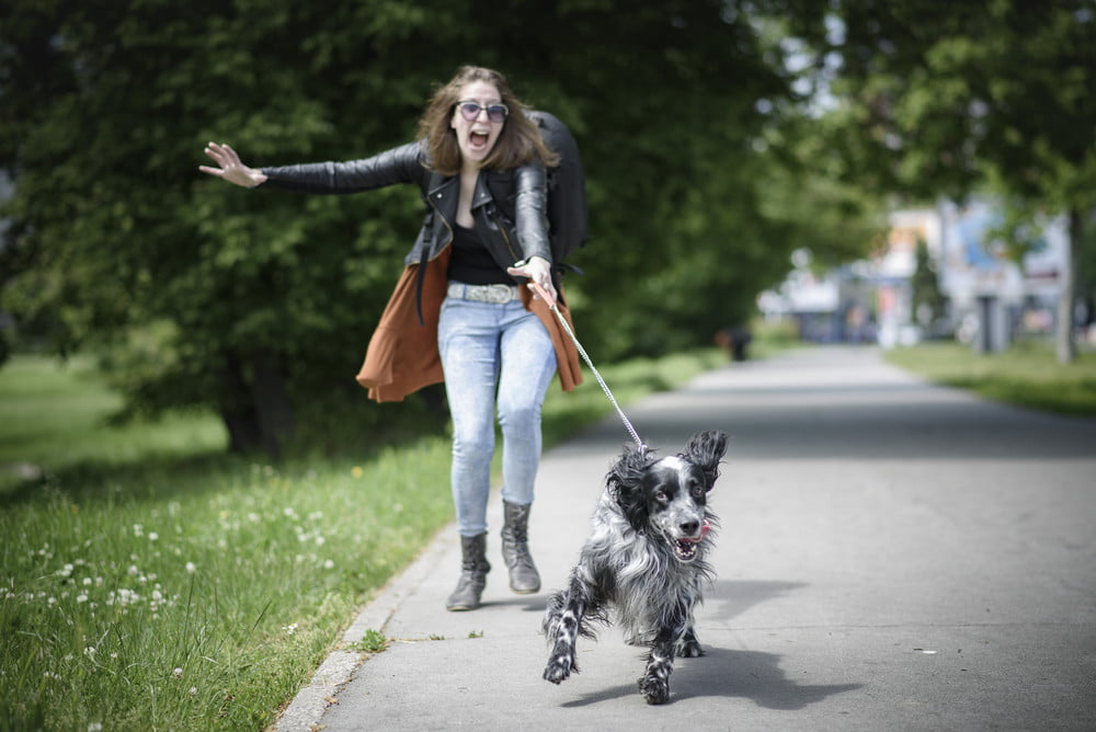 6 quick ways to stop a dog from leash pulling | PawTracks